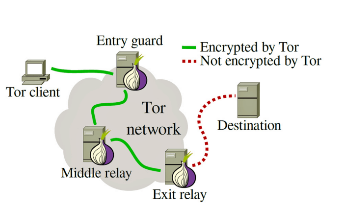 The inner workings of Tor's network structure